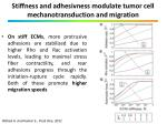 stiffness and adhesivness modulate tumor cell mechanotransduction and migration