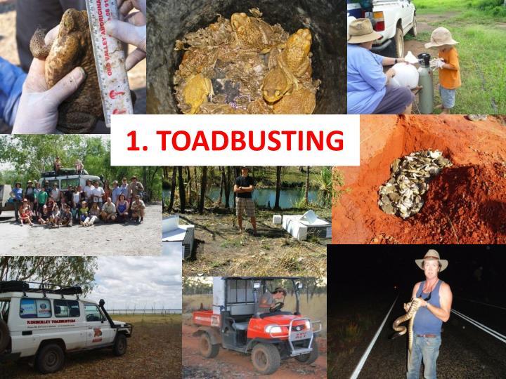 1 toadbusting