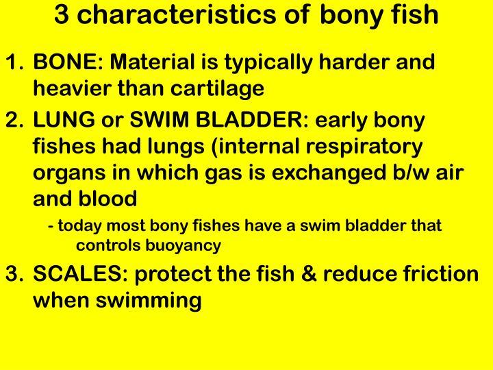 Ppt hagfish powerpoint presentation id 2046872 for Characteristics of fish