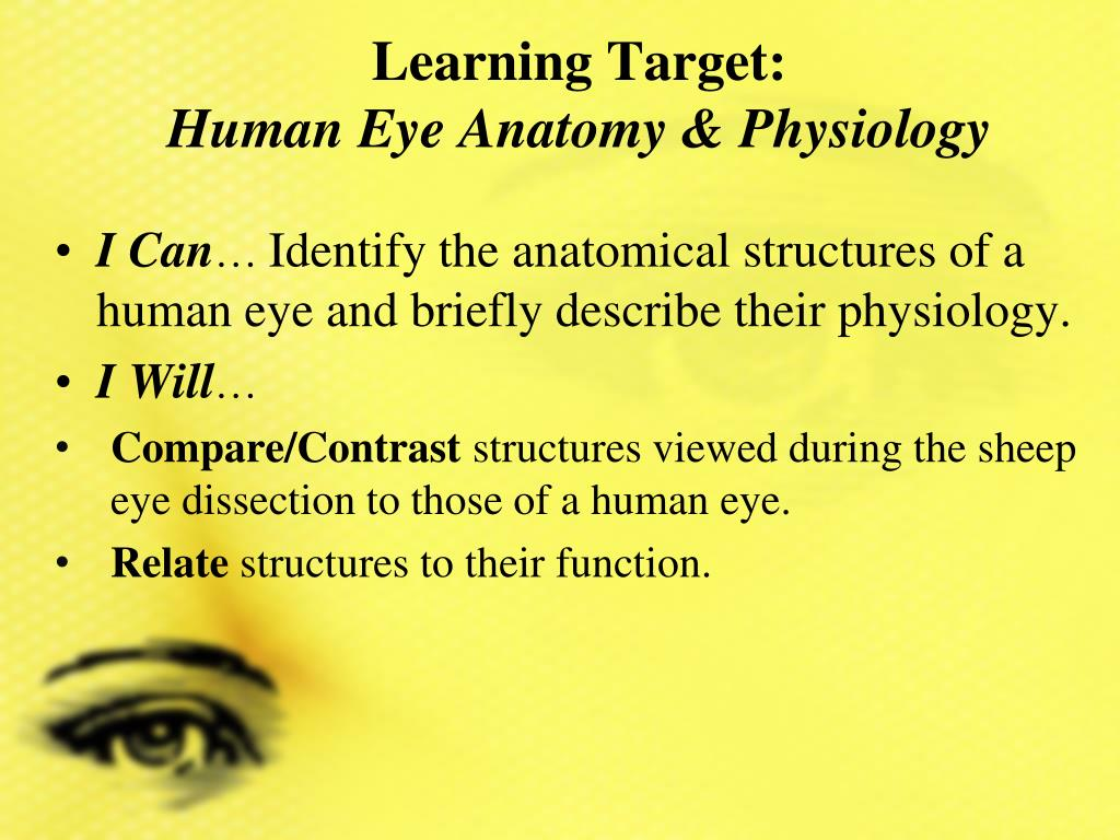 PPT - Learning Target: Human Eye Anatomy & Physiology PowerPoint ...