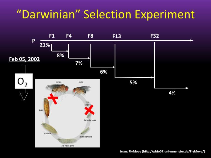 """Darwinian"" Selection Experiment"