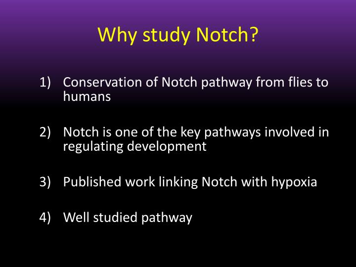 Why study Notch?