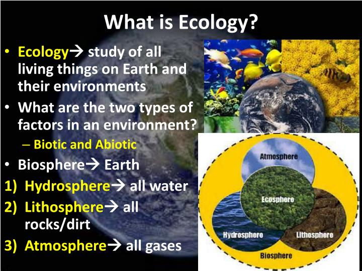 ecology sin and ecology salvation for Ecology and the church: in this scheme, salvation, characterized by both deliverance and blessing, is the process of imaging wholeness and unity (imago dei).