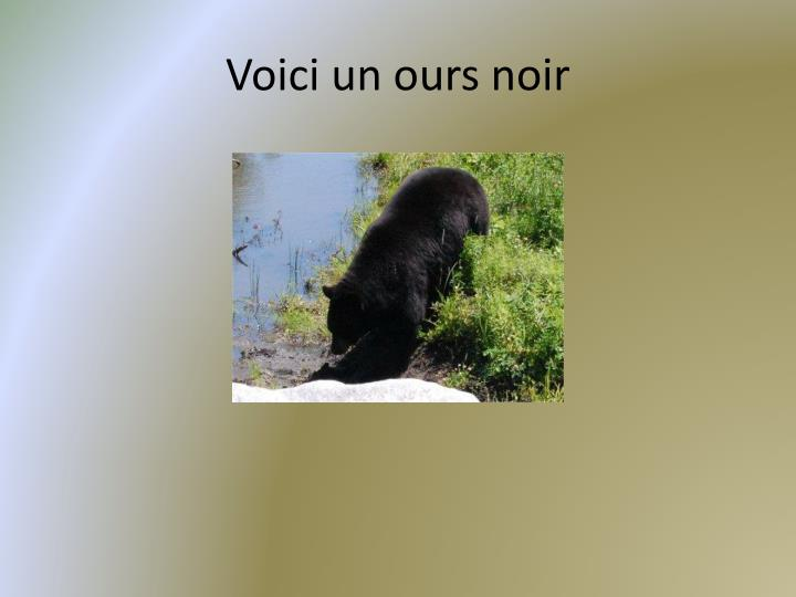 Voici un ours noir