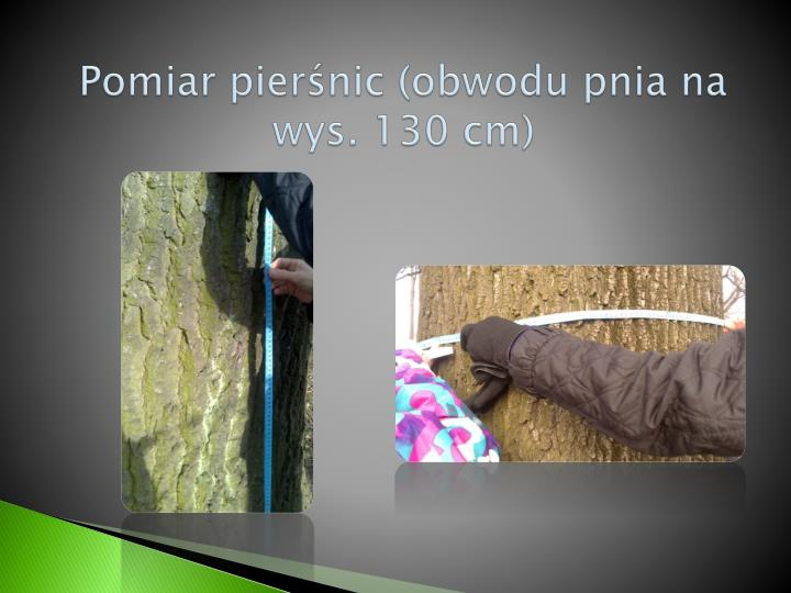 Pomiar pierśnic (obwodu pnia na wys. 130 cm)