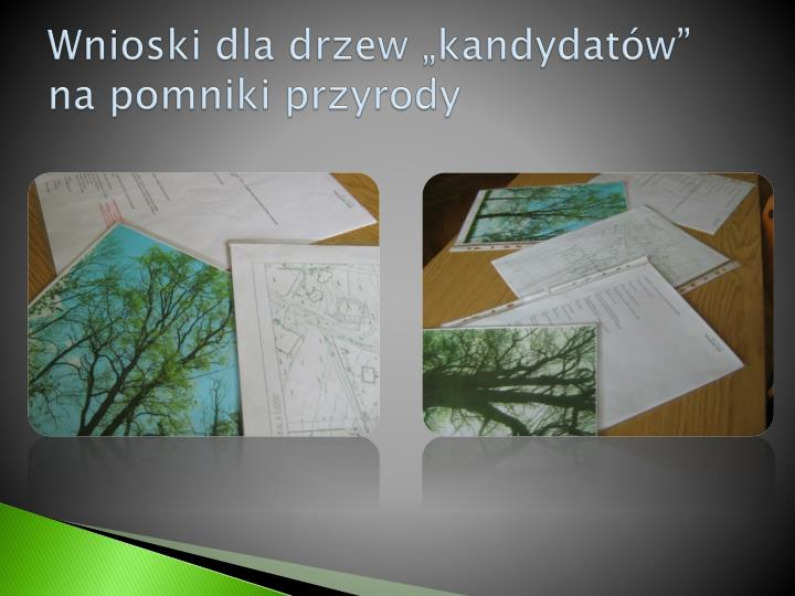 """Wnioski dla drzew """"kandydatów""""          na pomniki przyrody"""