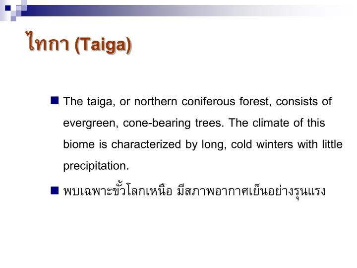 ไทกา (Taiga)