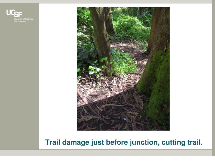 Trail damage just before junction, cutting trail.