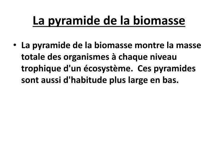 La pyramide de la biomasse