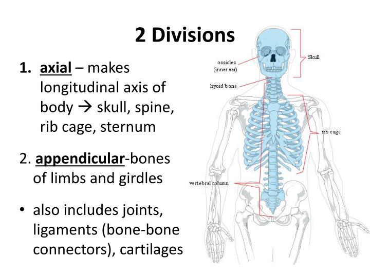 Ppt Skeletal System Powerpoint Presentation Id2049227