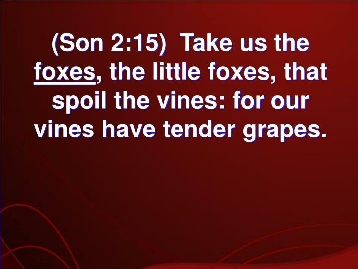 (Son 2:15)  Take us the