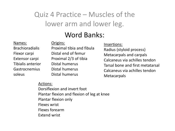 Quiz 4 practice muscles of the lower arm and lower leg word banks