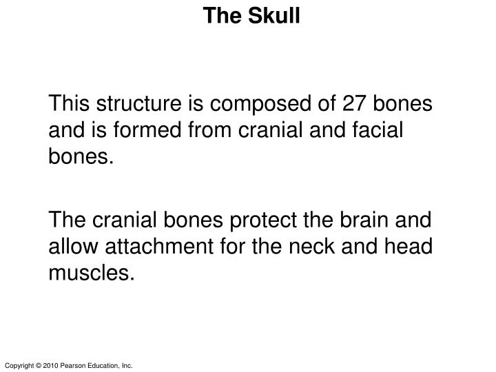 This structure is composed of 27 bones and is formed from cranial and facial bones.
