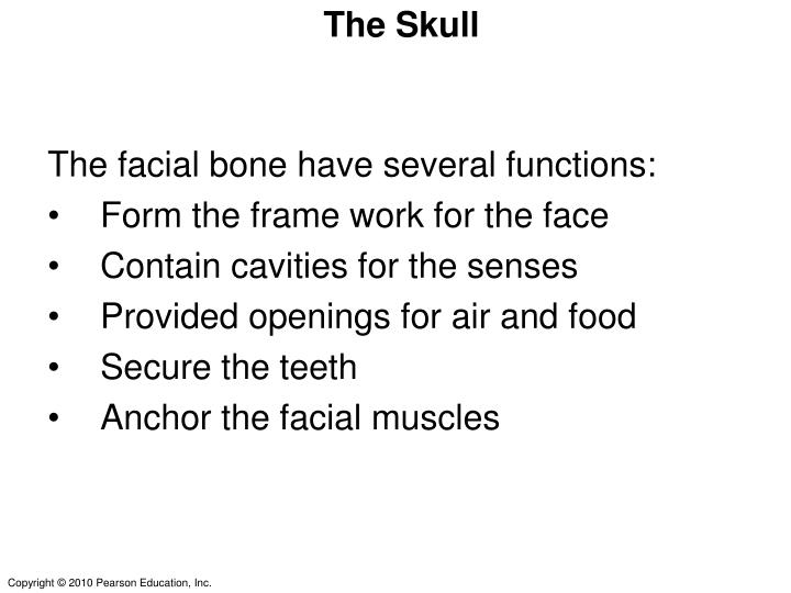 The facial bone have several functions: