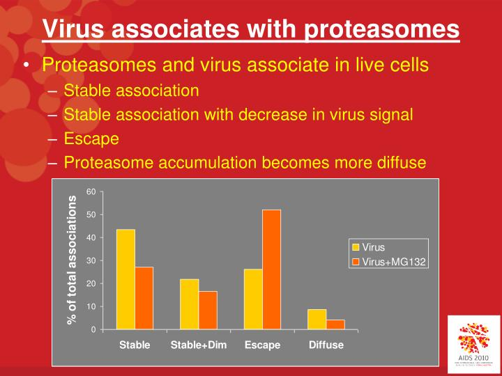 Virus associates with proteasomes