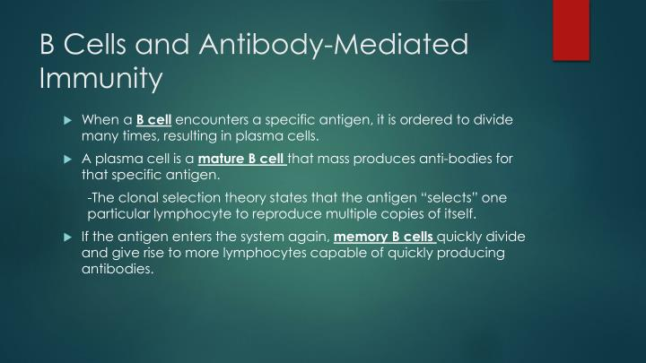 B Cells and Antibody-Mediated Immunity
