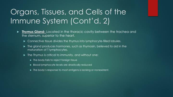 Organs, Tissues, and Cells of the Immune System (Cont'd