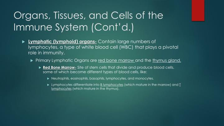 Organs, Tissues, and Cells of the Immune