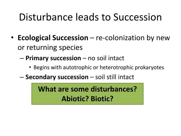 autotrophic succession