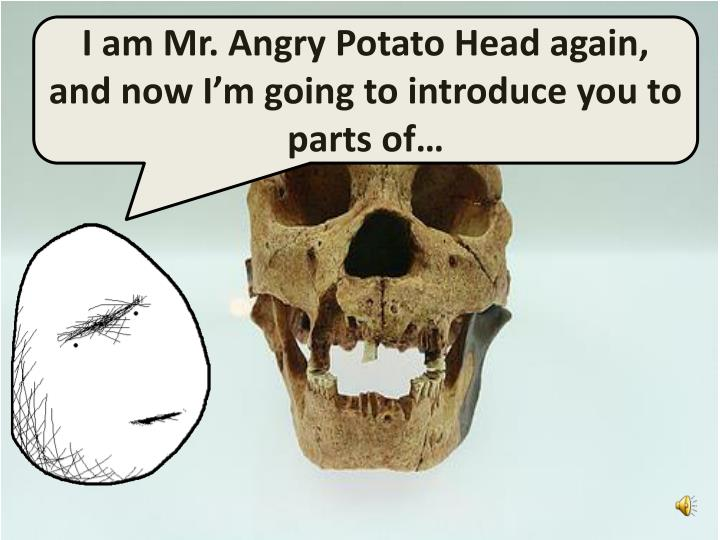I am Mr. Angry Potato Head again, and now I'm going to introduce you to parts of…