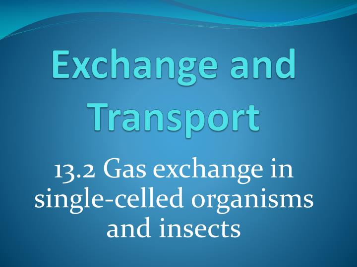 exchange and transport n.