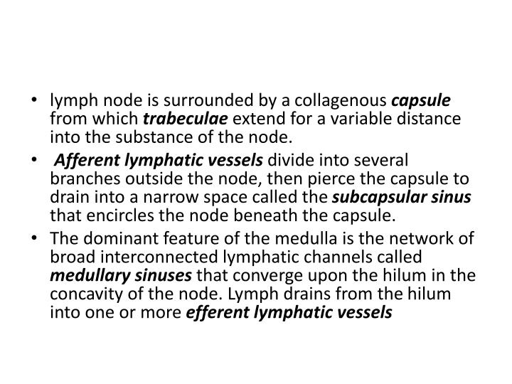 lymph node is surrounded by a