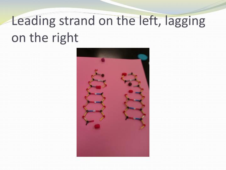 Leading strand on the left, lagging on the right
