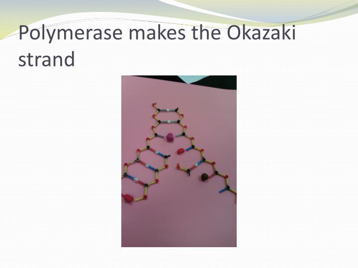 Polymerase makes the Okazaki strand