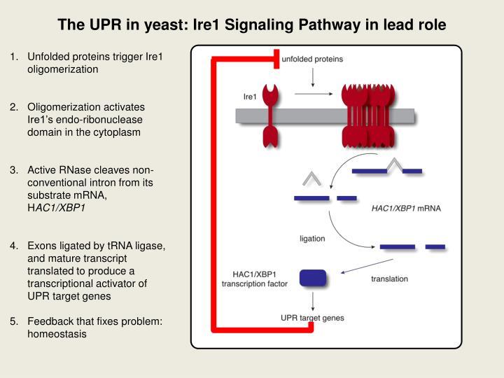 regulation of protein homeostasis in neurodegenerative