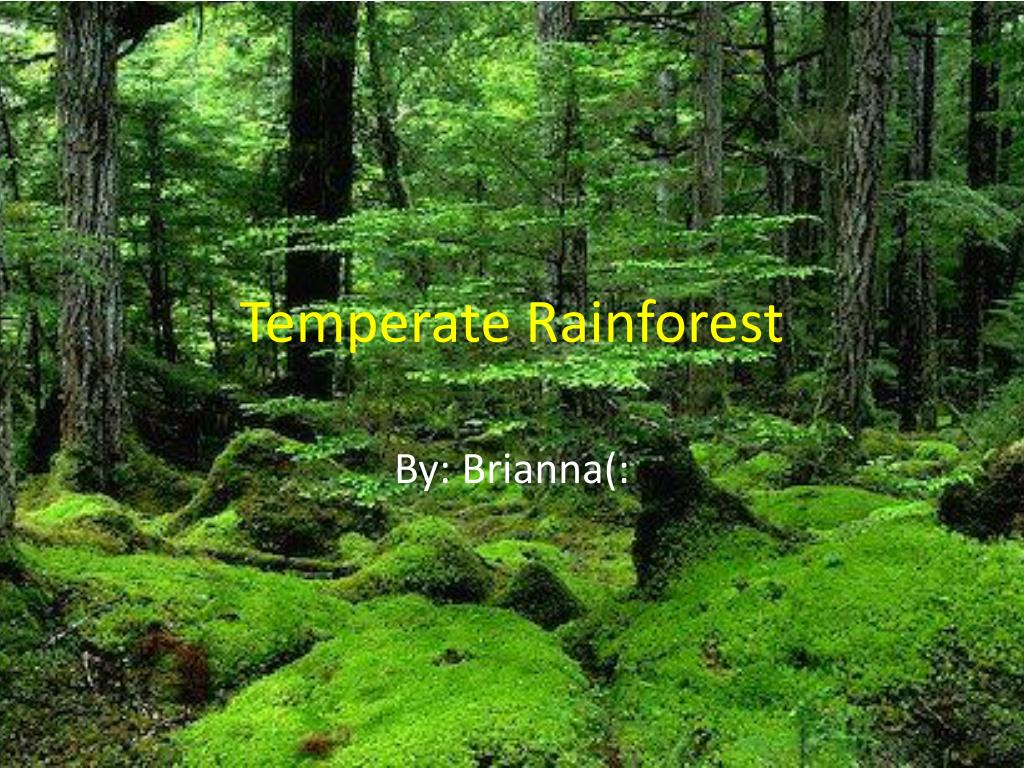 ppt temperate rainforest powerpoint presentation id 2057313