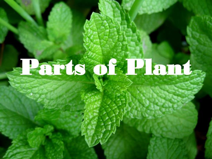 parts of plant n.