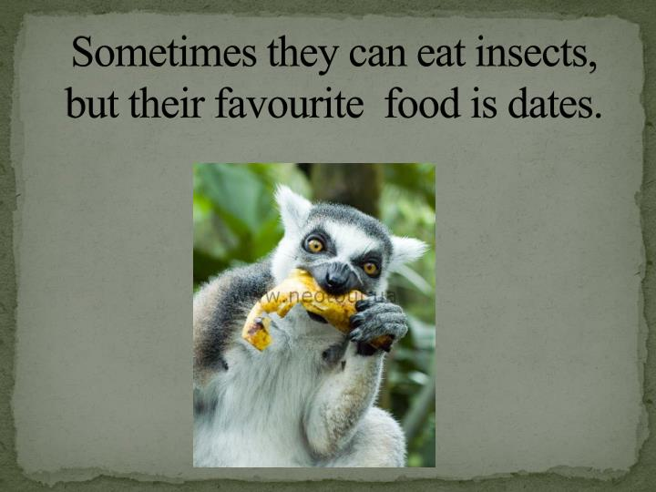 Sometimes they can eat insects, but their