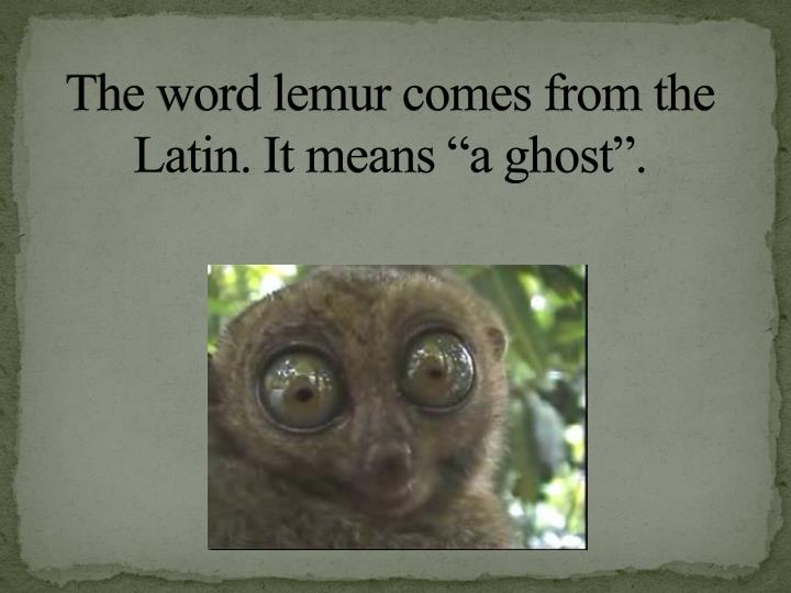 The word lemur comes from the latin it means a ghost