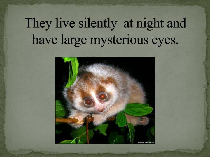 They live silently at night and have large mysterious eyes