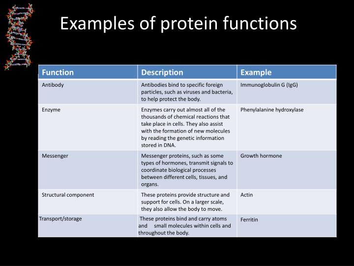 Examples of protein functions