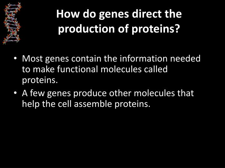 How do genes direct the production of proteins?