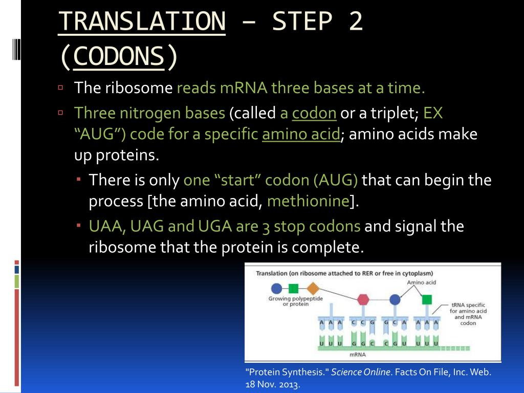 PPT - Unit 7 Part 2 – protein synthesis PowerPoint Presentation - ID