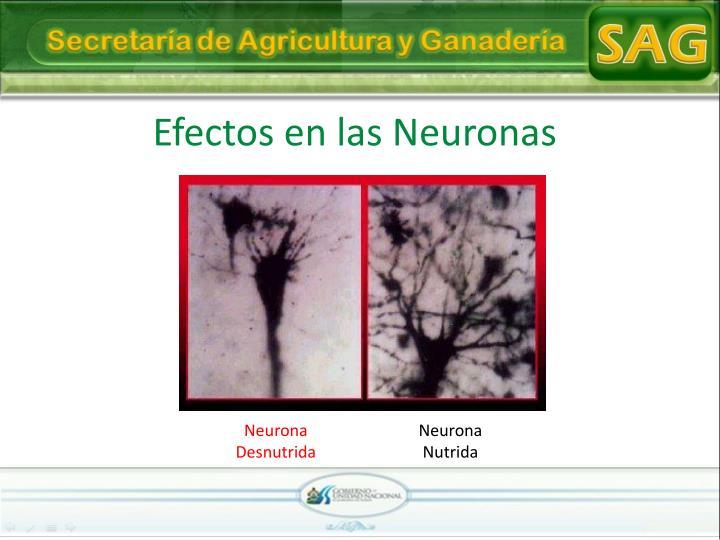 Efectos en las Neuronas