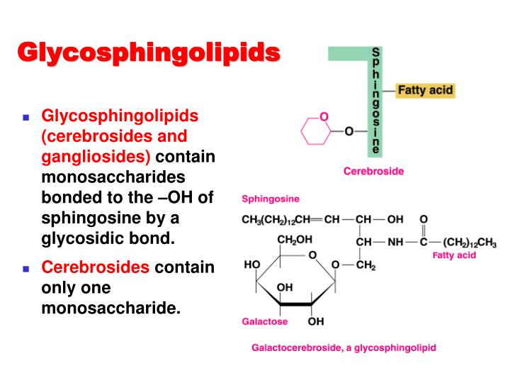 Glycosphingolipids