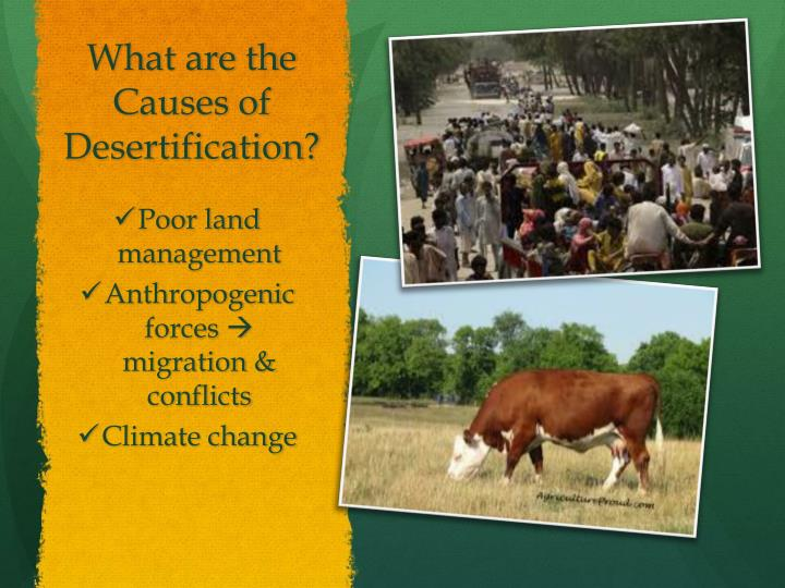 What are the Causes of Desertification?