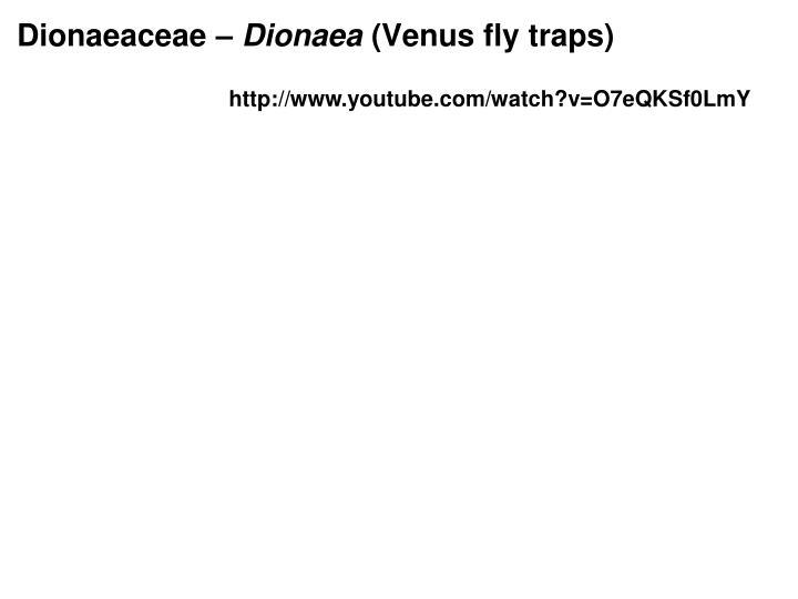 Dionaeaceae –