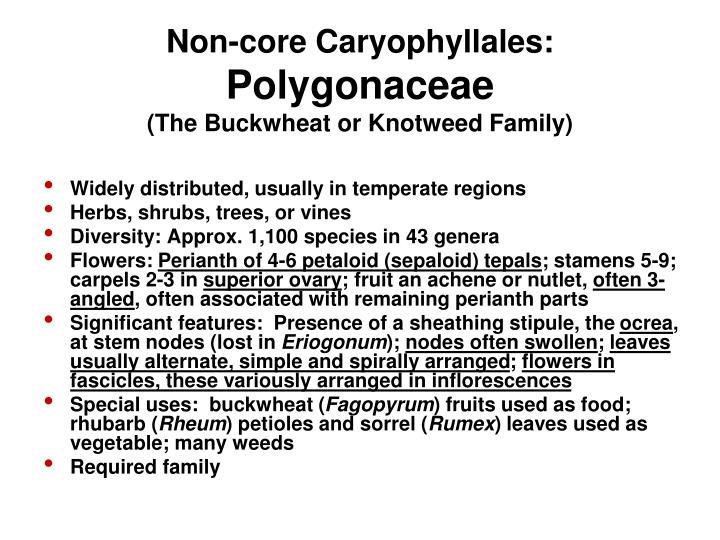 Non-core Caryophyllales: