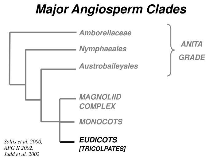 Major Angiosperm Clades