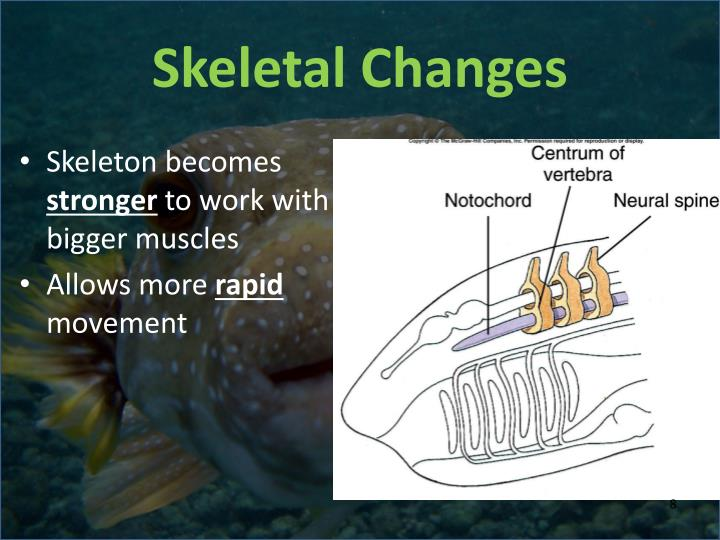 Skeletal Changes