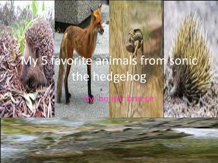 my 5 favorite animals from sonic the hedgehog n.