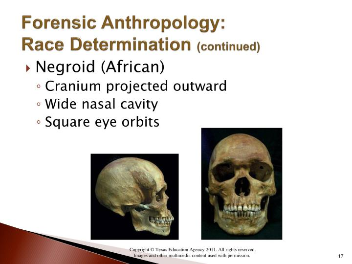 essays on forensic anthropology Forensic anthropology is the scientific study of human skeletal remains in the context of crime, or medico-legal contexts it is a fairly new and growing discipline that is made up of several branches of academic disciplines brought together to assist in legal cases involving the death and/or identification.