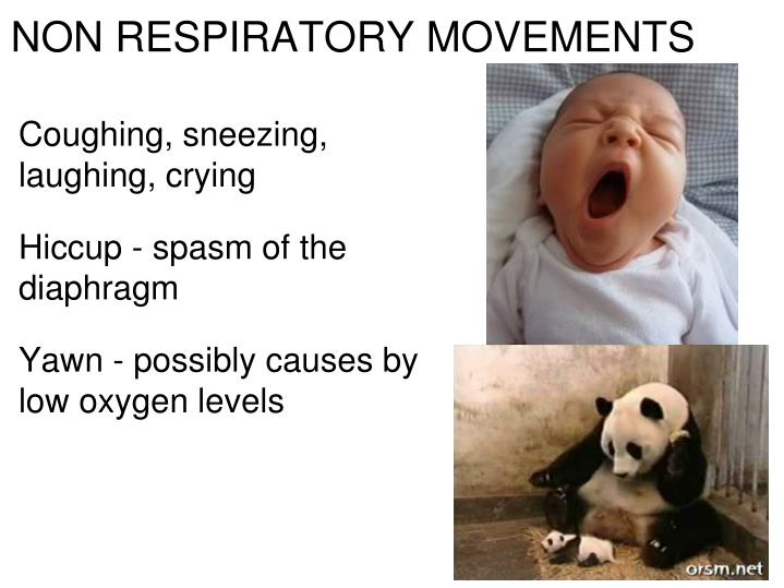NON RESPIRATORY MOVEMENTS