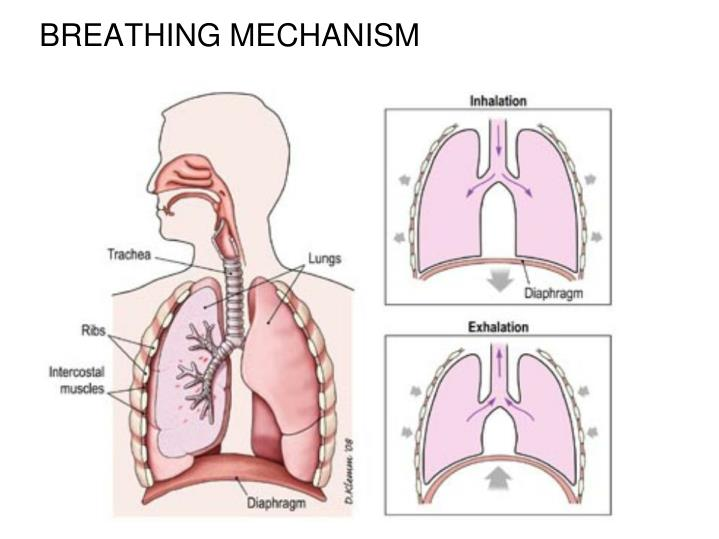 BREATHING MECHANISM