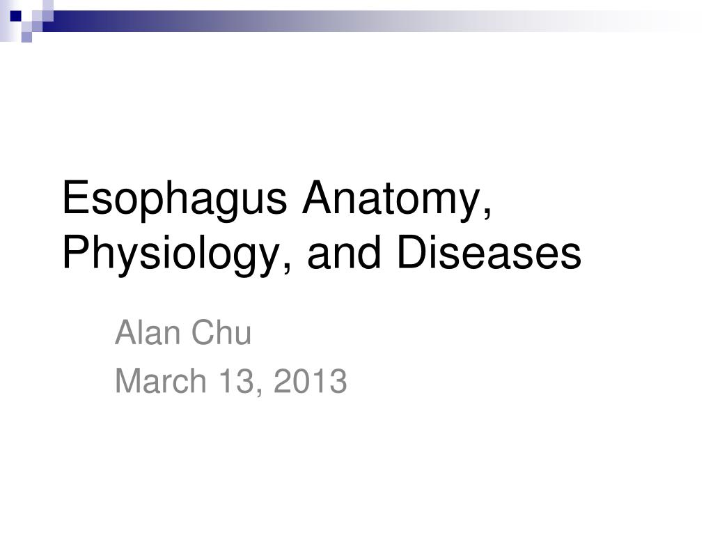 PPT - Esophagus Anatomy, Physiology, and Diseases PowerPoint ...
