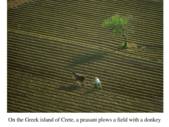 On the Greek island of Crete, a peasant plows a field with a donkey